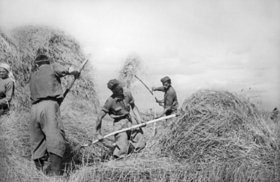 Пленные итальянские солдаты на сельскохозяйственных работах в СССР